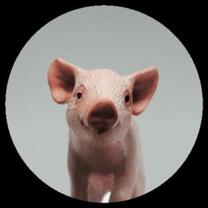 Pig Badge