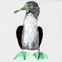 Cosmo Sheldrake - Galápagos (Original Soundrtrack)
